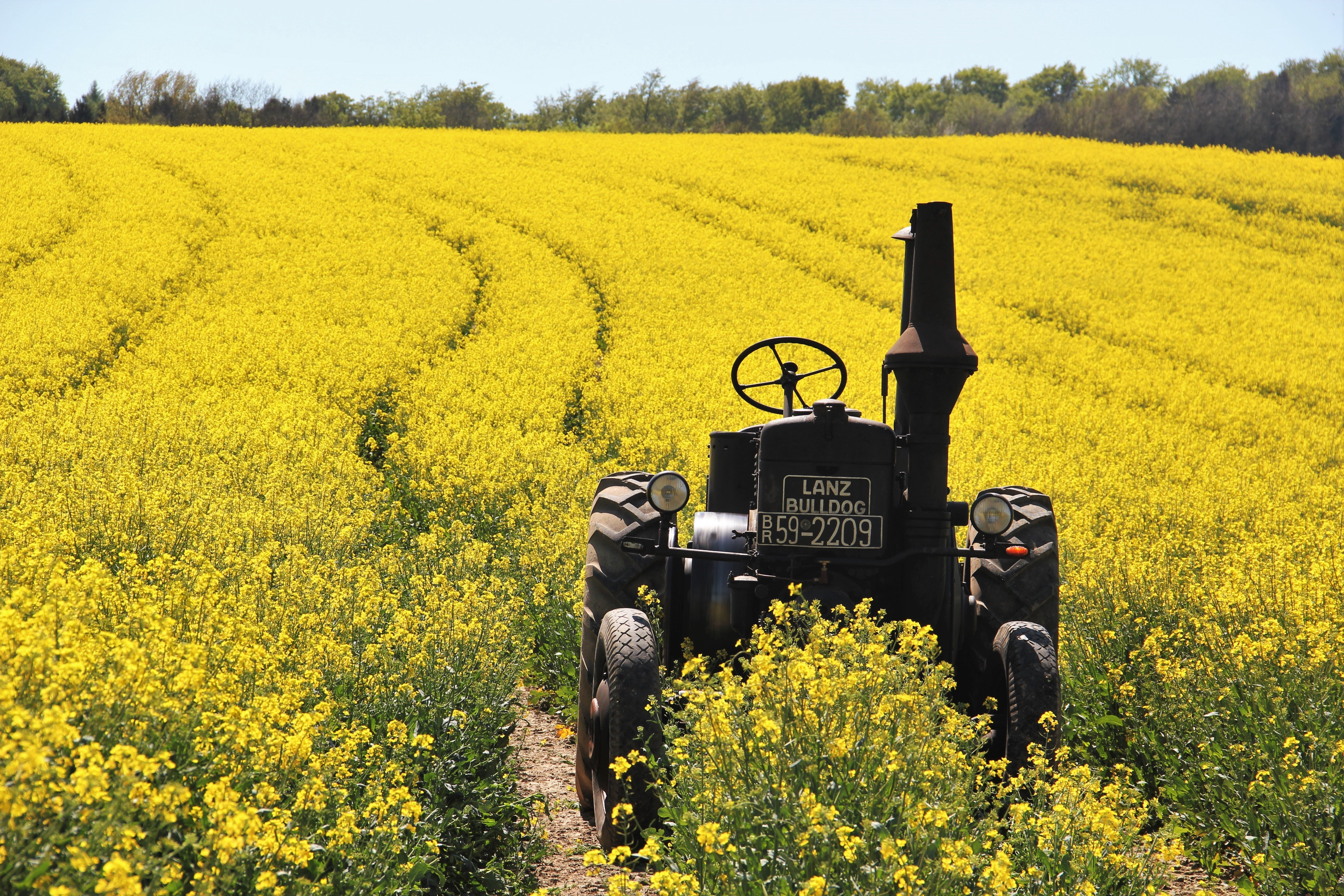 field-of-rapeseeds-1382772